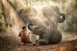 The elephants in forest and mahout with baby elephant  lifestyle of mahout in Chang Village, Surin province Thailand.