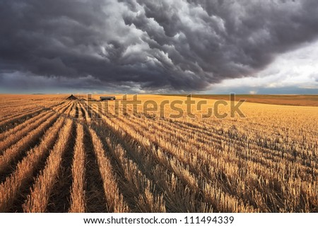 The enormous storm cloud covered the sky. The harvest in the fields of Montana - stock photo