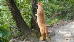 The entire path of the yellow cat, which eats the churro on the pine tree, is the length of the cat that stretches out because it doesn't want to climb the tree.