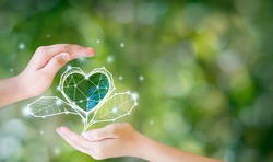 The environment in the hands of the tree planted seedlings is protected by the heart. Green background, bokeh, tree on grassland, nature, forest conservation concept, world conservation concept.