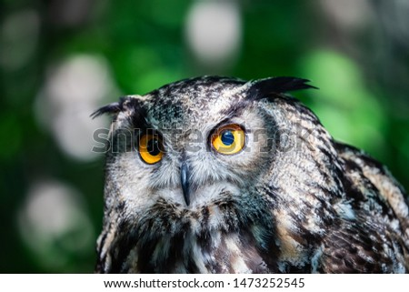 The Eurasian eagle-owl is a species of eagle-owl that resides in much of Eurasia. It is also called the European eagle-owl and in Europe, it is occasionally abbreviated to just eagle-owl