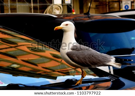 The European herring gull is a large gull One of the best known of all gulls along the shores of western Europe, it was once abundant. #1103797922