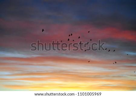 The evening sky is light. #1101005969