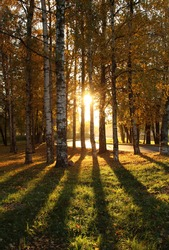the evening sun shines from behind trees that cast shadows in the autumn park