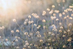 The evening sun shines in the light of the fairways with grassy flowers, light brown flowers are blossoming around the area looks beautiful and has a dimension like a painting.