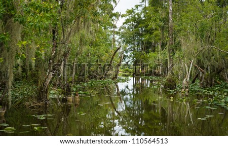 Stock Photo The Everglades are subtropical wetlands located in the southern portion of the U.S. state of Florida. This is a National Park and a very popular travel destination.