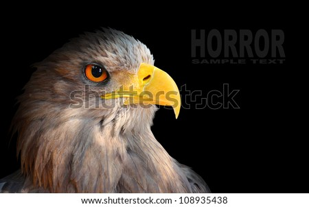 The evil eye. Awesome eagle from fantasy. Picture with space for your text.