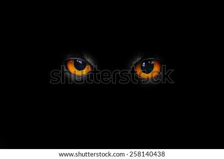 The evil eyes.