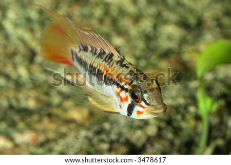 the exotic fish in aquarium, natural lighting