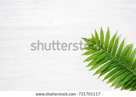 the exotic plants on the surface of wood, fern leaves on white wooden background #731701117