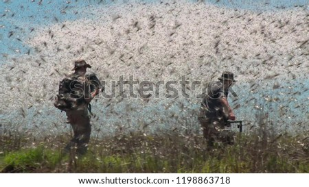the explorer stay among locusts swarm in Madagascar