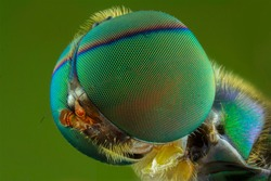 The extreme close up of flies.macro.insect