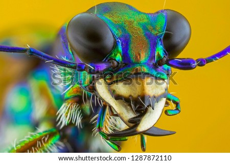 the extreme close up of tiger battle,macro,insect.