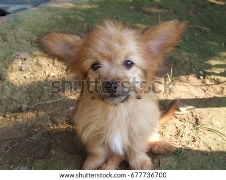 the eyes of cute   dog  Photo stock ©