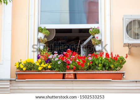 The facade of the house with flowers on the windowsill. Landscaping.