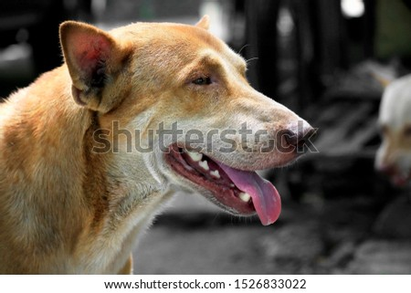 The face of a fierce dog can be seen chewing and the tongue. #1526833022