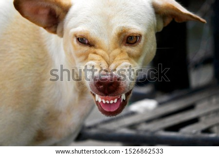 The face of a fierce dog can be seen chewing and the tongue. #1526862533