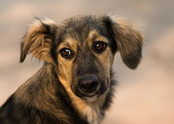 The face of the dog. Portrait of an animal. True friend. Homeless. Friend. Fear. friend of human