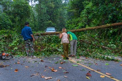The fallen tree closed the road traffic.Forest officials helped each other to remove trees from the road.