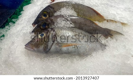 The famous fish in Manado, North Sulawesi, is named Tude Fish. Photo stock ©