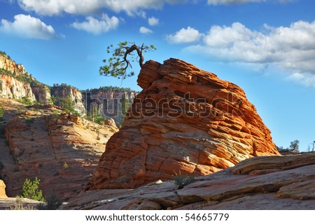 "The famous round rock of red sandstone and with a little ""jerky"" tree.Zion  National Park, sunset"