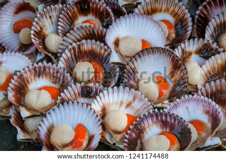 "The fan shells are a product known internationally as ""Scallops"""