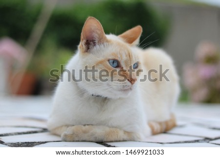 The fantastic and winderful cat  #1469921033