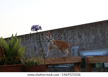 The fantastic and winderful cat  #1469921036