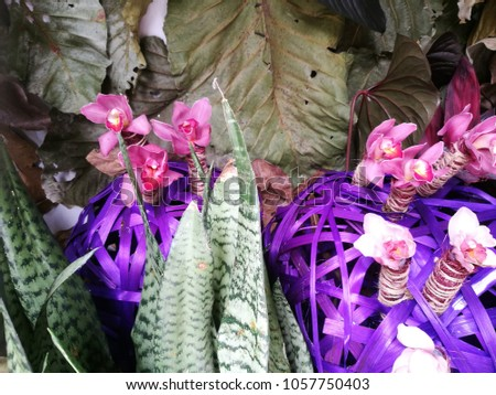 The fantastic dark and light purple orchids decoration on ground. #1057750403