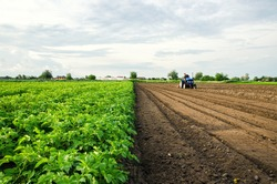 The farmer cultivates half of the field. Harvesting and destruction of tops after harvest. Freeing up the area for a new harvest. Milling soil. Plowing. Loosening surface, land cultivation. Farming