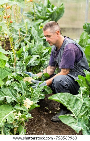 The farmer harvesting the squash #758569960