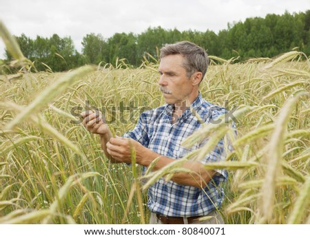 The farmer inspects a field of rye - stock photo