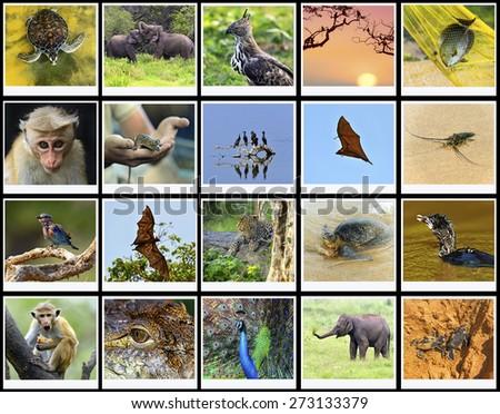 The fauna in the park Yala Sri Lanka safari