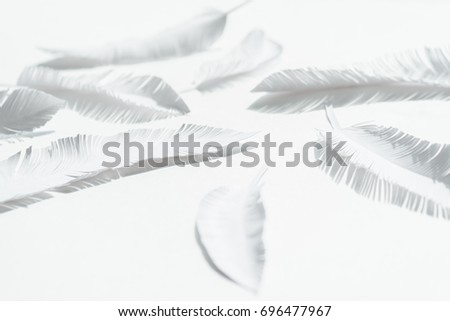 the feathers of a bird made of white paper on white background. White on white