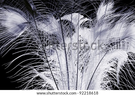 The feathers of peacock in darkness.