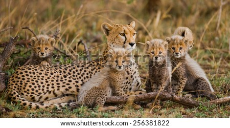 The female cheetah with cabs. Serengeti National Park.