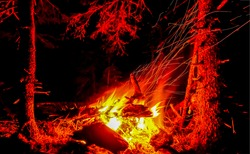The fire of a campfire in the night forest. Burning fire. Night campfire. Burning flames of fire