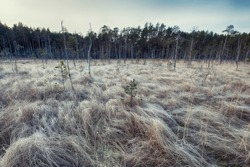 The first frost on the grass in the swamps in the forest. Waves on a frosty gray field from hoarfrost  autumn in November in the national park of the Lammin Suo