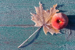 the first frosts in late autumn. the apple and maple leaf were covered with frost. autumn background, top view