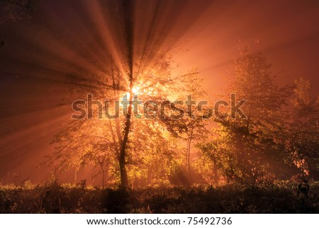 The first rays of the rising sun in misty forest