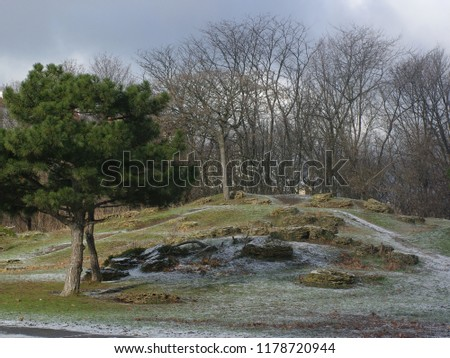 the first snow in a city park. coniferous and deciduous trees in winter in the park
