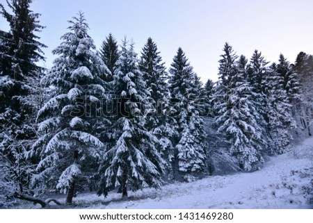 The first snowfall covers the forest with white #1431469280
