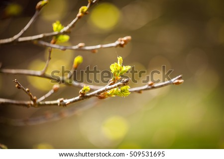 the first spring gentle leaves, buds and branches macro background ストックフォト ©