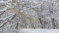the firstsnow in November in the forest