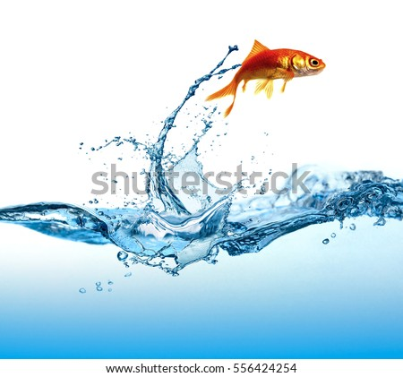 The fish is jumping #556424254