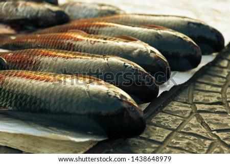 The fish is placed on the placing on the market. #1438648979