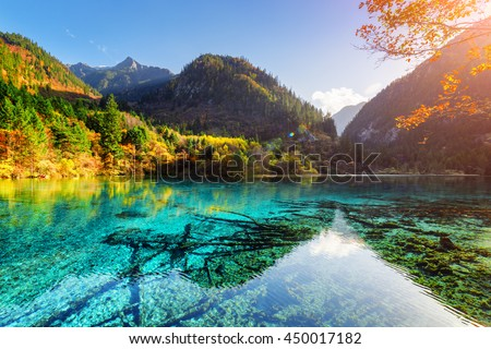 The Five Flower Lake (Multicolored Lake) and mountains, Jiuzhaigou nature reserve, China. Autumn woods reflected in azure water. Submerged tree trunks at the bottom. The sun is shining through foliage #450017182