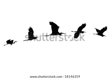 The flight of the Herons isolated.