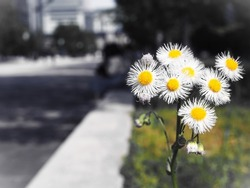 The flower blooming frigidity near the Tokyo station, Tokyo, Japan