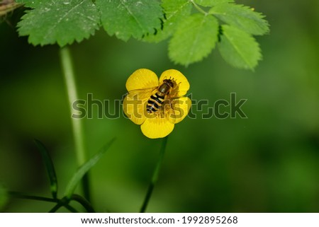 The flower in forest, Siberia, Russia. Selective focus.